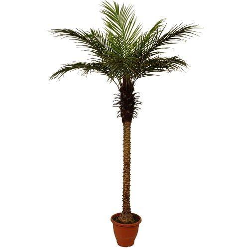 Искусственное растение H210 cm