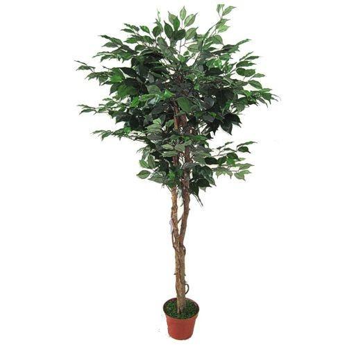 Искусственное растение  фикус 150cm