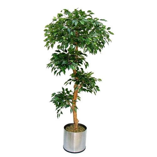 Искусственное растение - фикус.