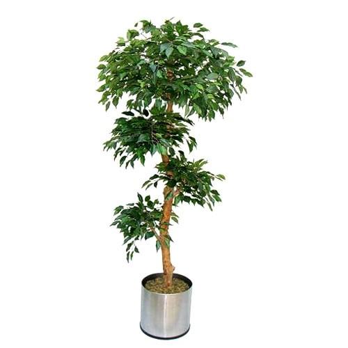 Искусственное растение  H180cm